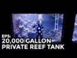 Absolute Genius Builds 20,000 Gallon Aquarium In His Home