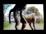 Animal Mating Crazy Videos - Funny Videos 2015 Part 1