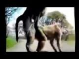 Animal Mating Crazy Videos - Funny Videos 2015 Part 1