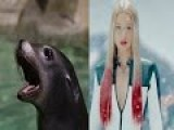 Screaming Sea Lion Featuring Iggy