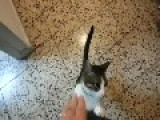 Affectionate Cat Welcomes Owner Home After Vacation