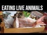 6 Animals That Are Eaten Alive By Humans