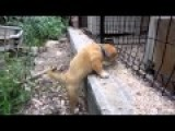 Puppies Climbs The Wall To Meet His Mom Are Locked Up