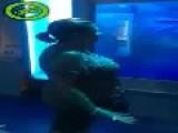 A Real Aquarium!?