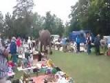 Escaped Elephant Visits Car Boot Sale