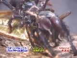 *NEW EPISODE* Camel Spider VS Giant Water Bug P1
