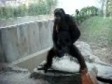 Monkey Spanking The Monkey
