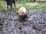 Max And Gilbert In The Mud. Happy New Year