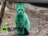 Cat Emerald Green In The Streets Of Bulgaria