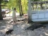 Pet Cat Saves Boy From Two Vicious GATORS -Cat Vs Gator