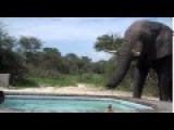 Thirsty Elephant Finds A Watering Hole