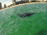 **MUST SEE** Giant Manta Ray Nearly Drowns Florida Kayaker