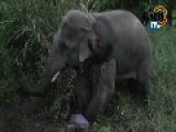 Elephant Causes A 3 Car Crash. Elephant CPR @ 00:33. 6 People, 1 Elephant Dead