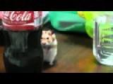 Dramatic Coke Addiction!