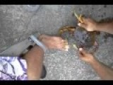 $100.00 Wager - For Live Crab To Pinch A Man's Toe S