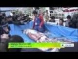 Japanese Fishermen Catch Giant 3 5 Meter Long Squid