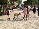 Japanese Schoolgirl Takes Selfie With Deer