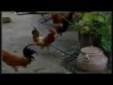 Cock Gangbang
