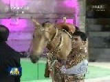 Turkmenistan Give Chinese President Akhal-teke Horse As Gift For Friendship