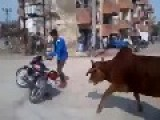 Man Gets Chased By Cows For Doing A Bike Stunt!