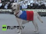 Ukraine: Meet Chiara, The Pro-Russian Labrador