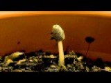Super High Resolution 4k Stopmotion Timelapse Mushroom Growth