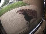 A Raven At My Door