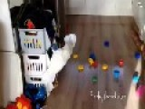 Naughty Cockatoo Throws Her Toys Onto Floor