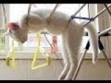Funny Cats Compilation 20 Min