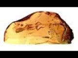 99 Million Year Old ERECT PENIS Preserved In Amber!