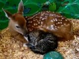 A Fawn And Kitten Cuddle Up