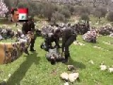 Assad Regime Loyalists Film A Ludicrous Propaganda Piece, Whilst Dressed As 'rebels'