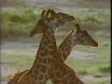 African Wildlife Foundation AWF BBC Planet Earth Team