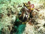Adventurer Encounters Colorful Cuttlefish Off Philippines Coast