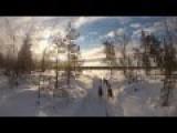 Arctic Sled Dog Safari In Lapland 2015