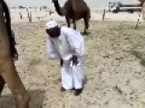 Arabs And Camels : A Love Story!