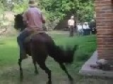 A Horse With Some Moves