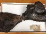 Ancient Sea Turtle Fossil Find Is Missing Piece Of Fossil Found In 1846