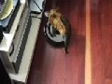 A New Twist On All Those 'cat In A Shark Suit' Roomba Vids