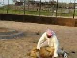 A Man Play And Ride Lion