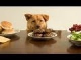 Animals Stealing Food Compilation 2013