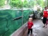 A Kid And A Playful Sea Otter