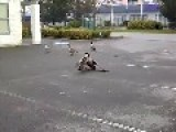 And That's How You End A Goose Fight