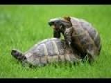 Animals Mating Compilation Happy 2015