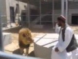 Afghani Man Vs Lion