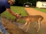 A Territorial Horse Puts A Brain Damaged Deer Out Its Misery