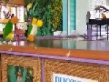 Adorable Parrots Shoot Some Hoops