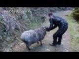 Angry Ram: Meeting The Infamous Rambro Seen On CNN! Ram Strikes Again!