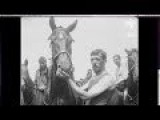 Animals In War WWI - A Tribute