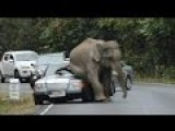 Angry Elephant Batters Car
